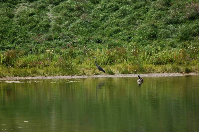 Lonesome George and the nice heron