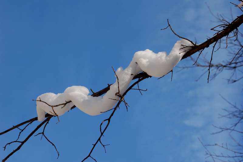 Albino tree snake waiting to pounce