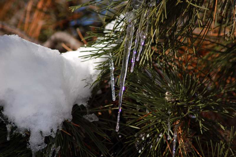 Icicles, natures Christmas tree ornaments