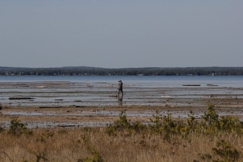 Looking for shorebirds at Isaacson's Bay