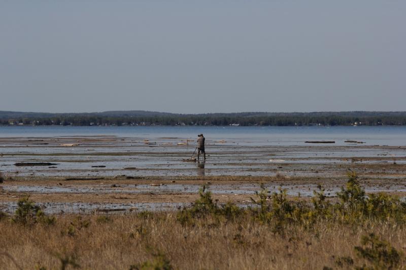 Looking for shorebirds at Isaacson's Bay
