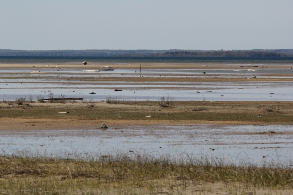 Mudflats at Isaacson's Bay