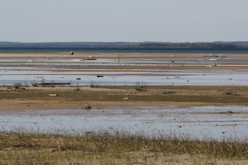 Mudflats at Isaacson's Bay