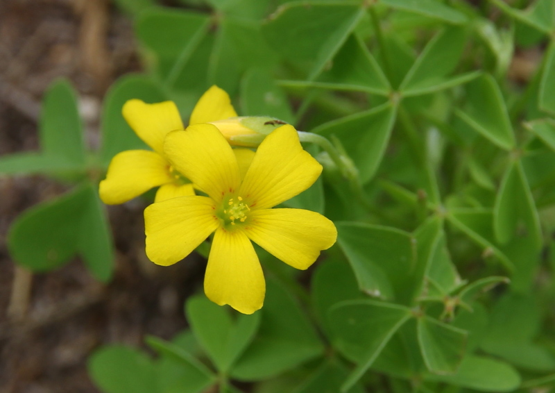 Very small yellow flower