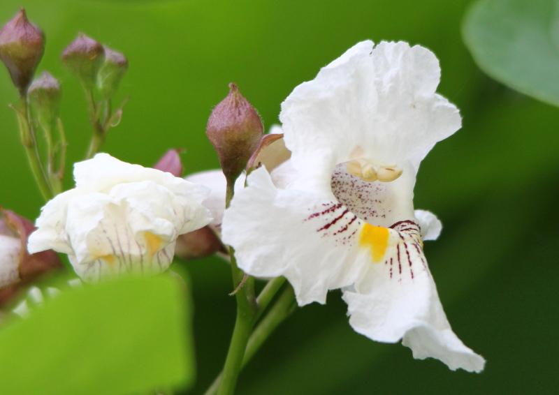 Unknown flowering bush