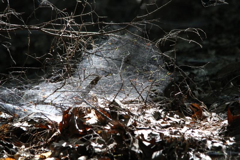 Sunlit spiderweb