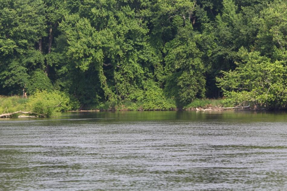Muskegon River at Lane's Landing
