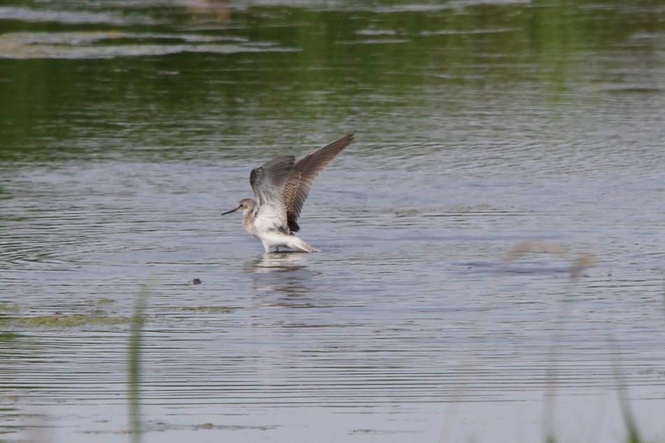 Shorebird bath