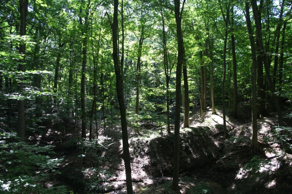 Blandford Nature Center Trails