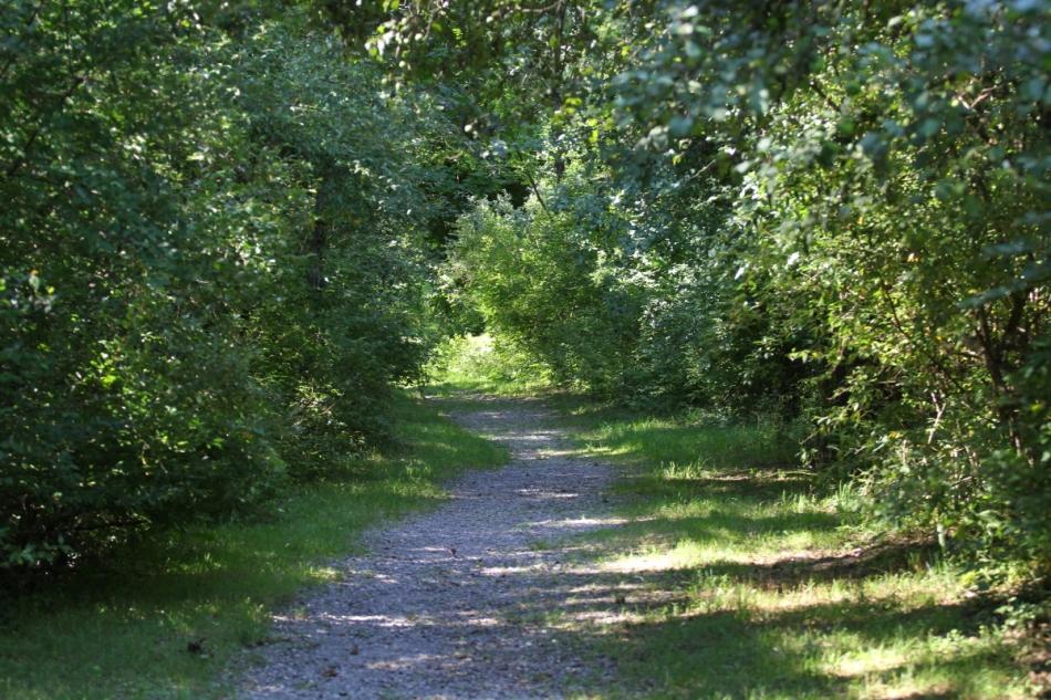 Pickerel Lake trail