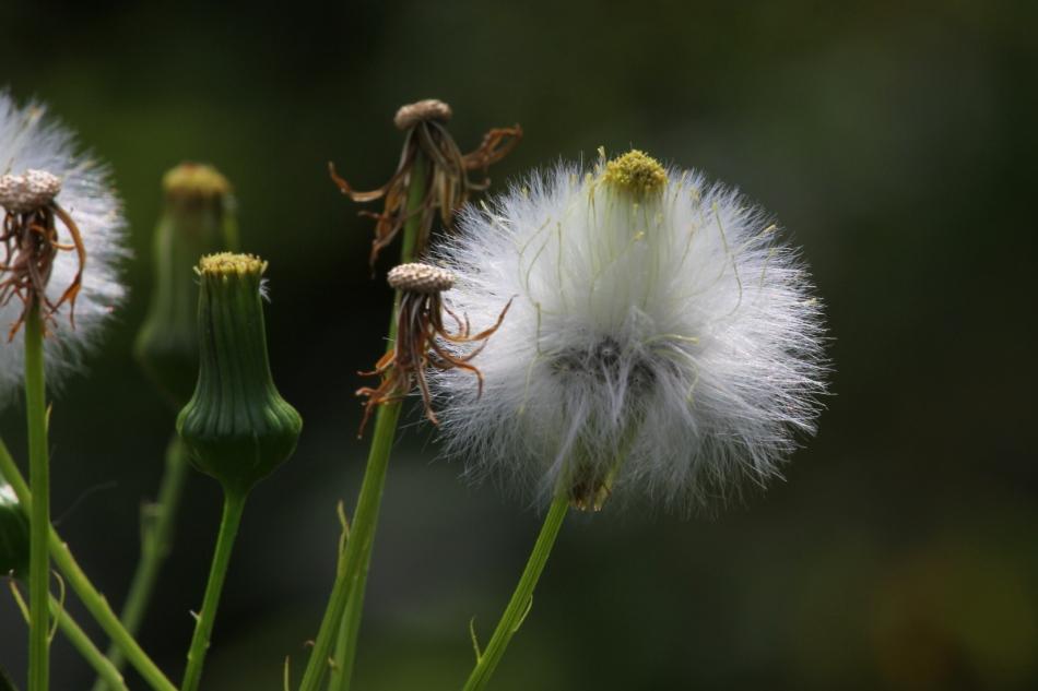 Ex-flower