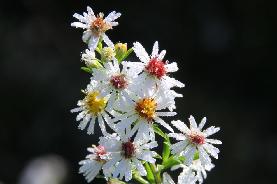 Dew covered flowers