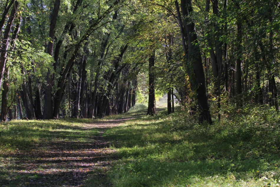 Wooded trail at Roselle Park