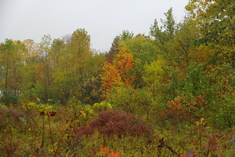 Michigan fall in the rain