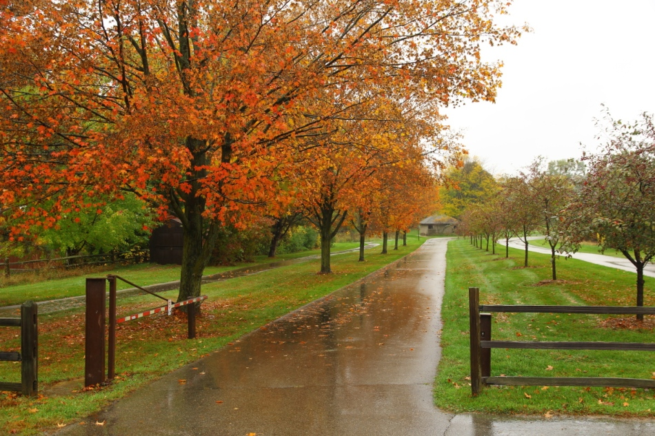 Michigan fall in the rain