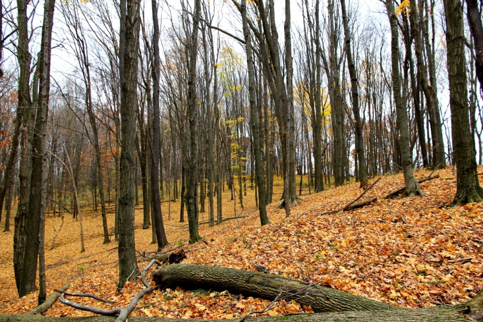 Ionia State Recreation area in the fall