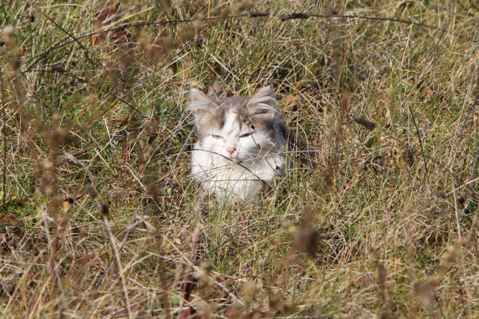 Cat dozing in the sun