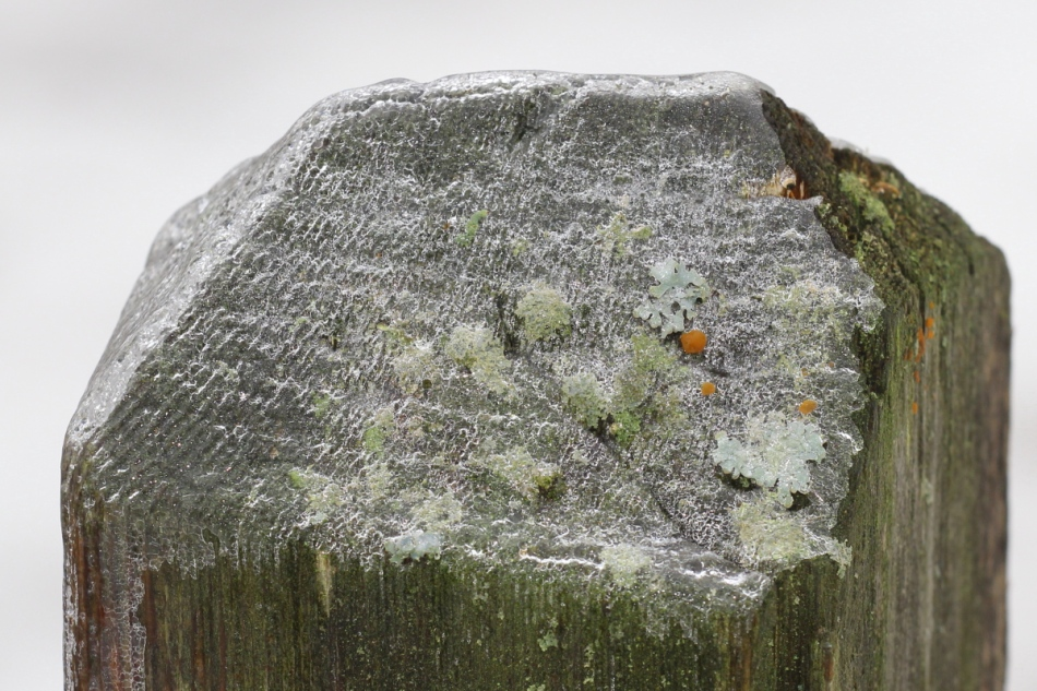 Ice on a lichen covered fence post