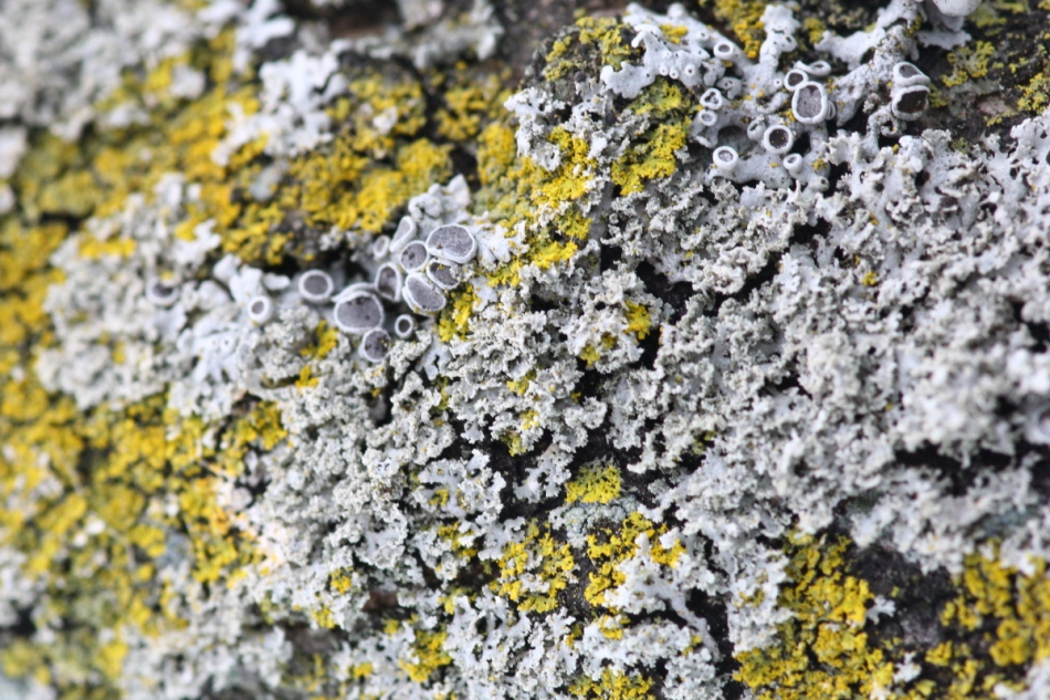 Lichens even closer