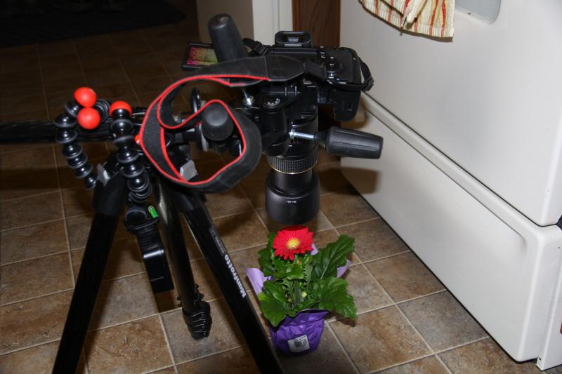 Macro set-up
