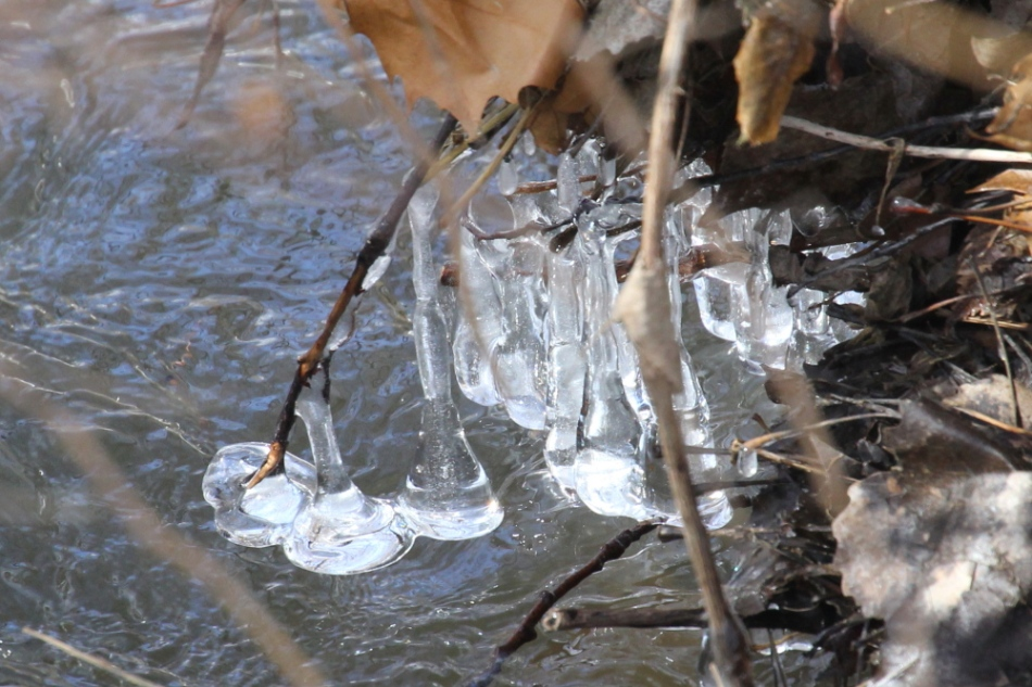 Ice hanging from branches over a creek
