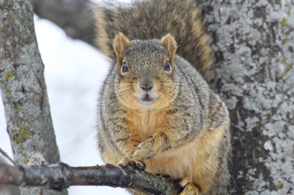 Fred the friendly fox squirrel asking me if he'd done alright