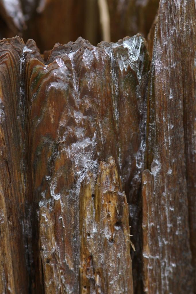 Ice covered log