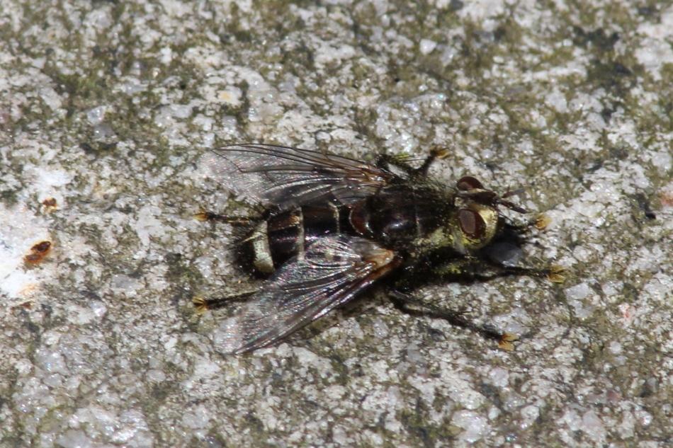 Unidentified fly object