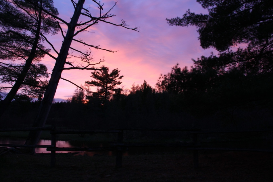 Evening at Goose Creek campground