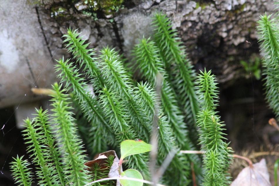 Moss?