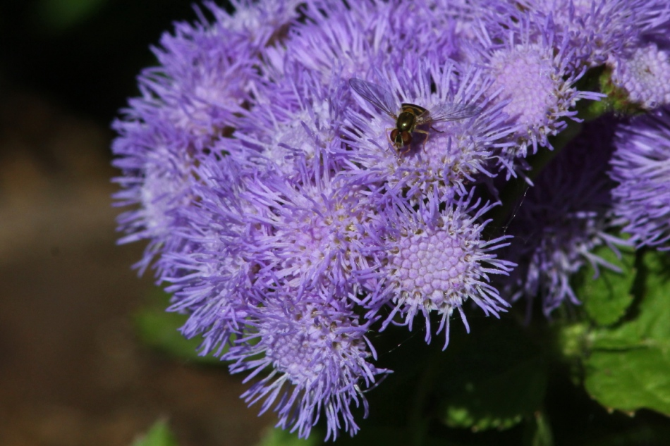 Bee on unidentified