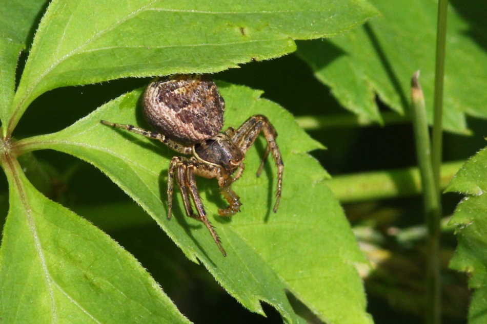 Spider with its meal