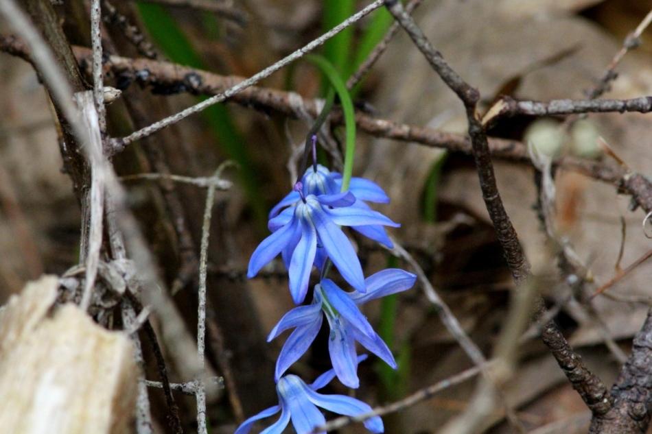 Unidentified flowering objects