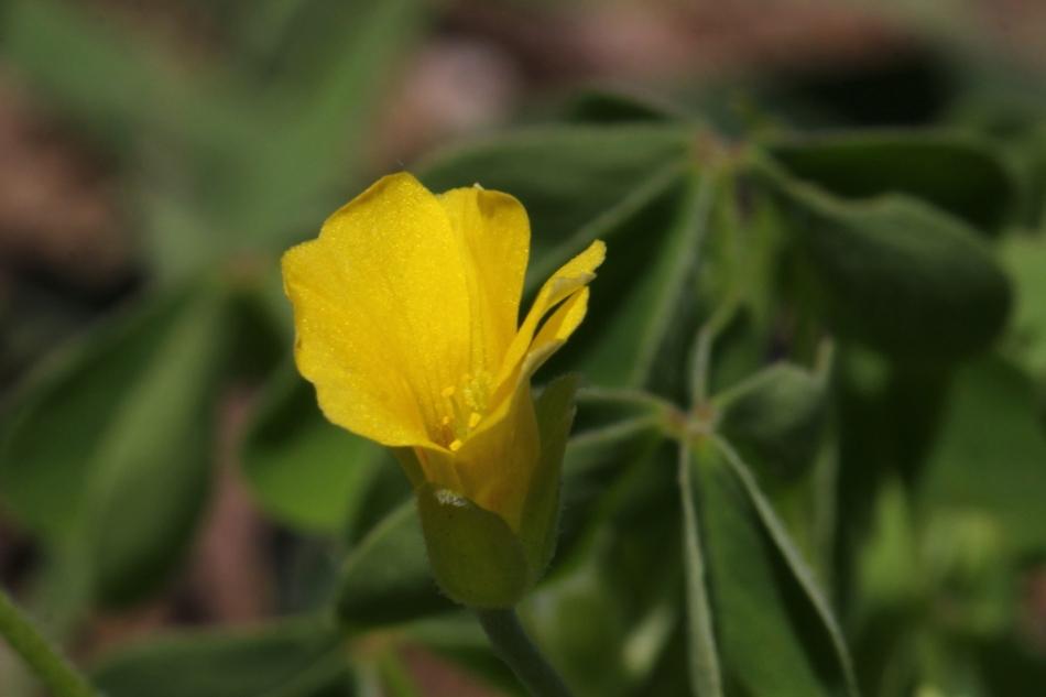 Unidentified tiny flower