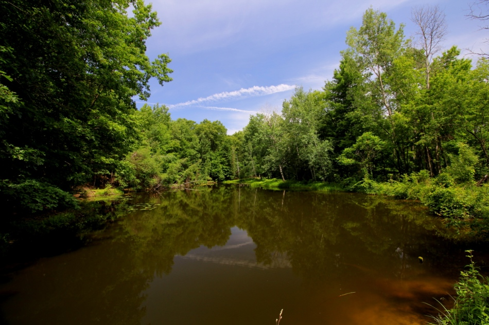 A pond at Pickerel Lake Nature Preserve