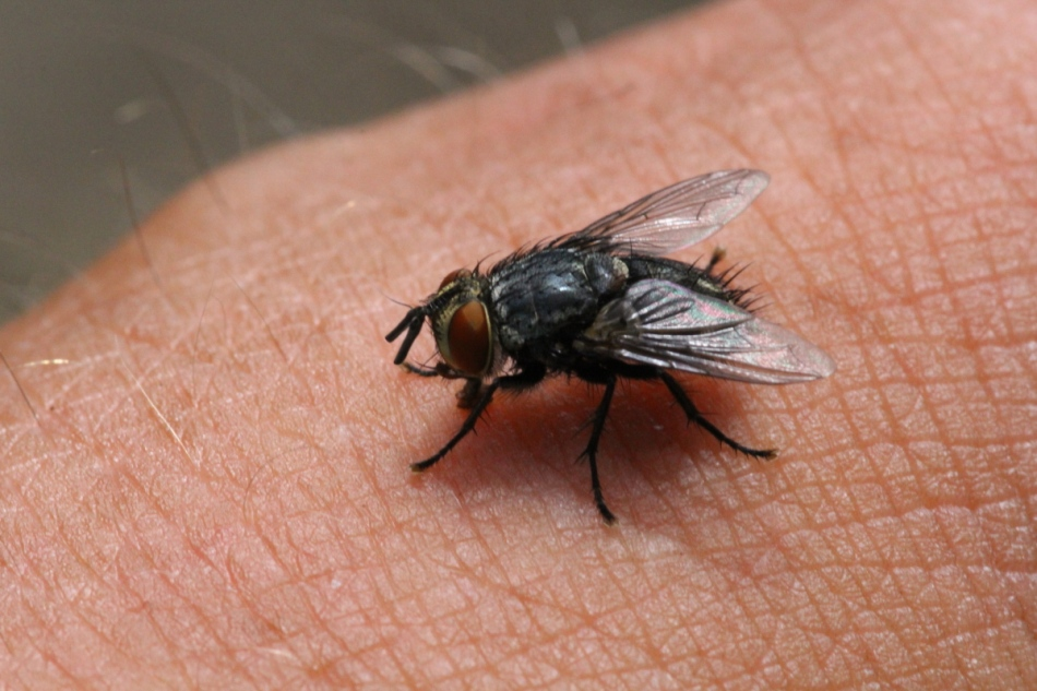 Fly on the back of my hand