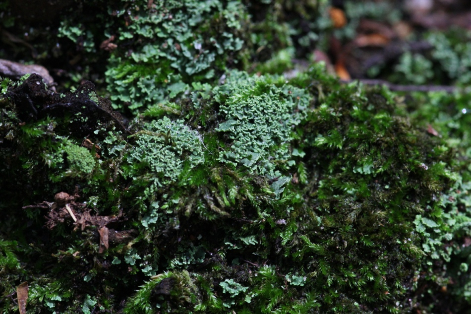 Lichens and mosses