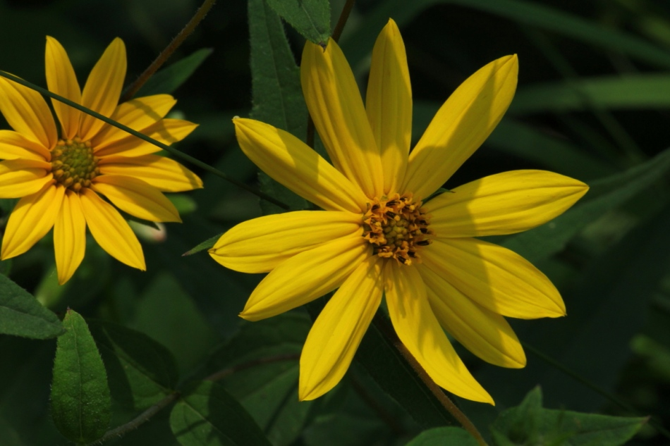 Unidentified yellow flower