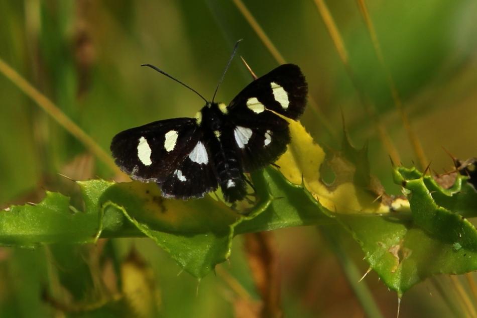 Unknown fluttering object