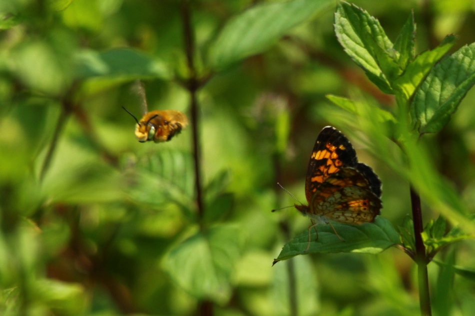 Unidentified butterfly and clear winged moth