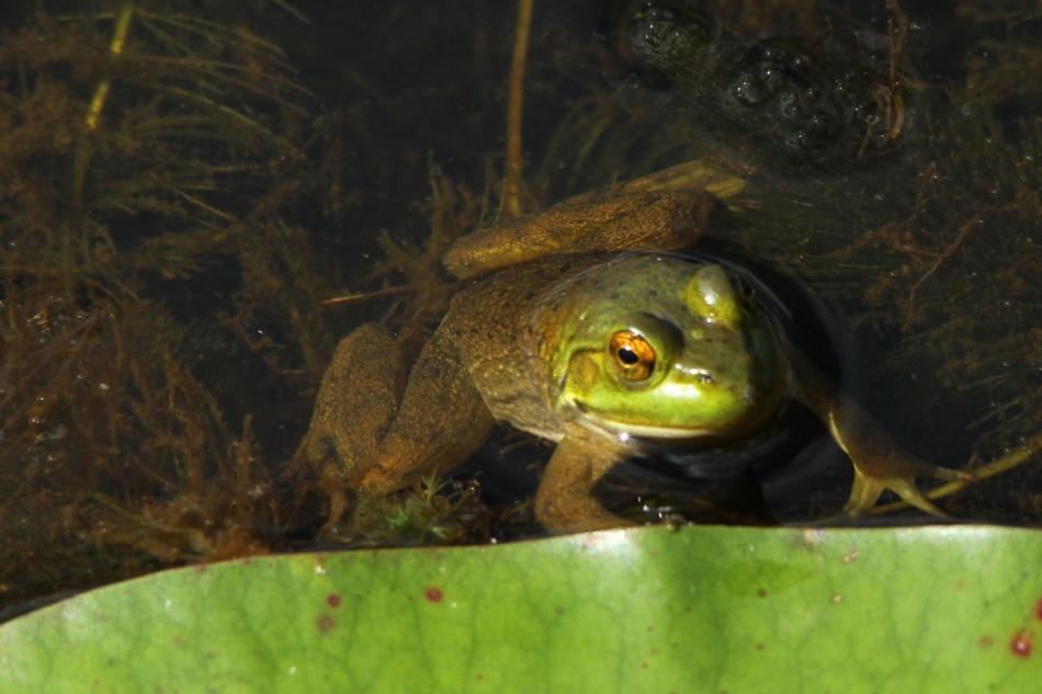 Unidentified froggy object