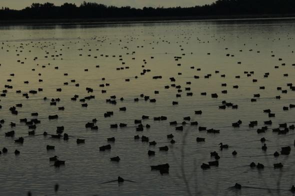 A duck hunter's dream