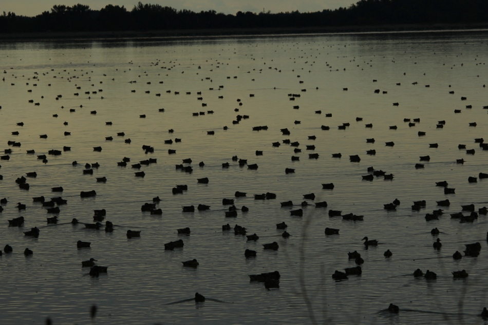 A duck hunter's dream