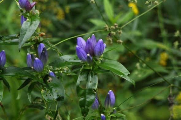 Unidentified blue flowers