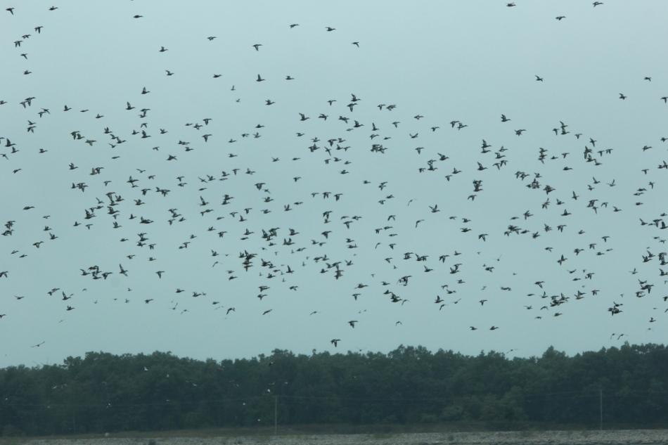 Just a few ducks