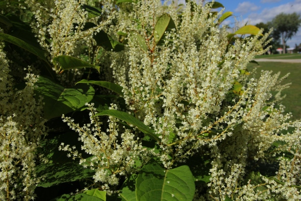 Unidentified white flowers