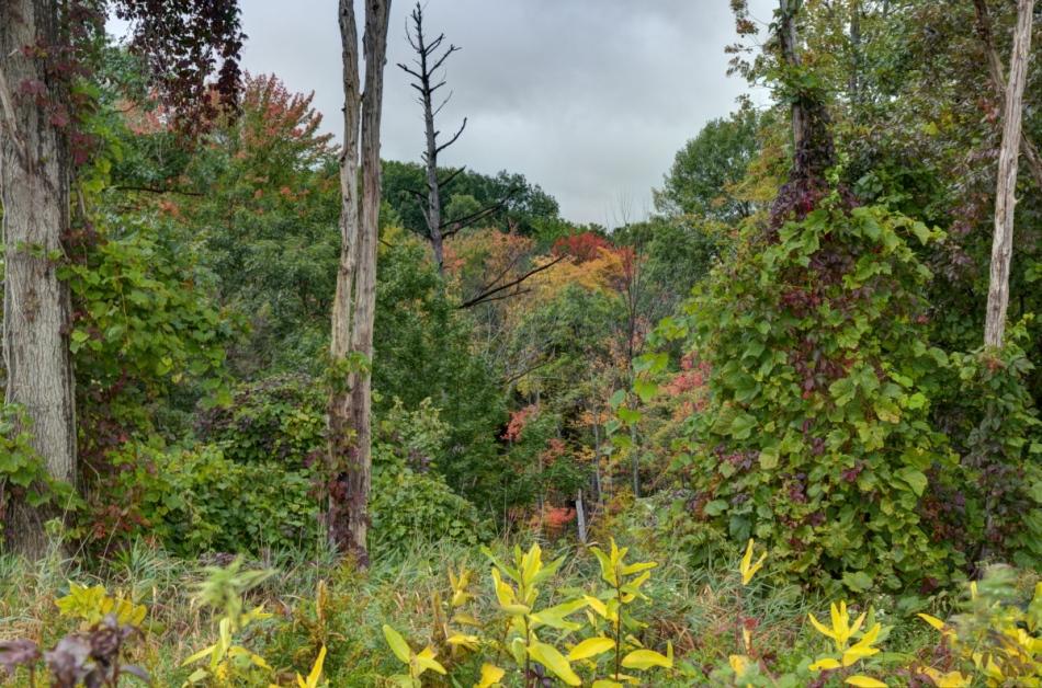 Landscape, using Photomatix