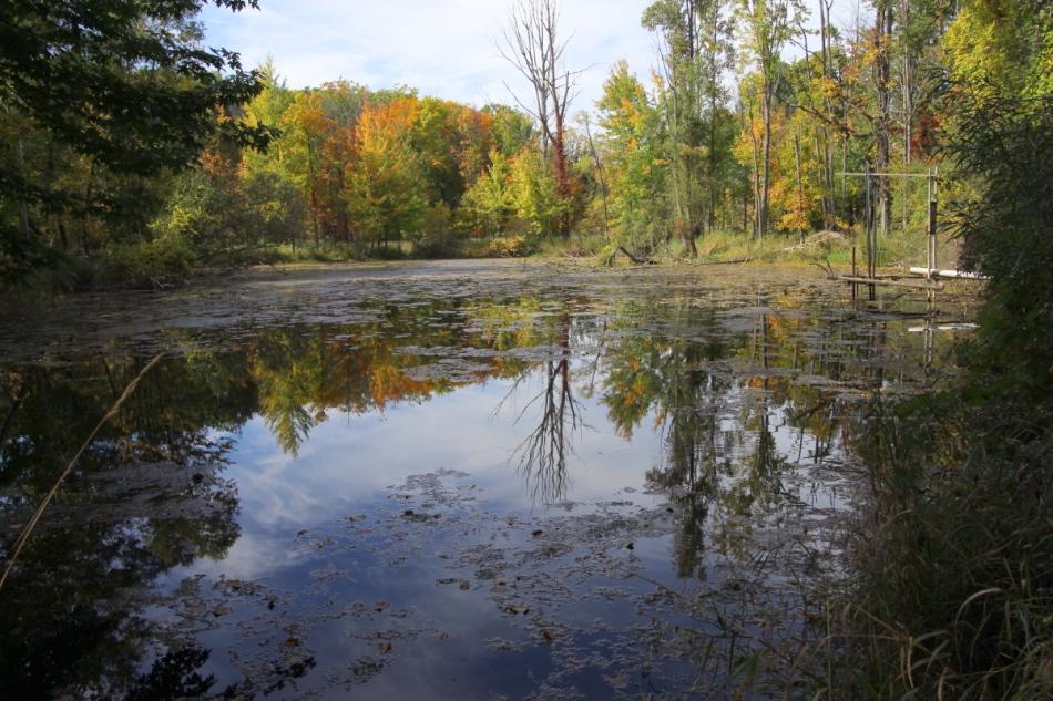 Palmer Park pond