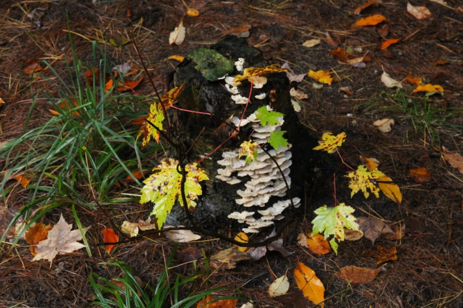Fungi covered stump in the dark