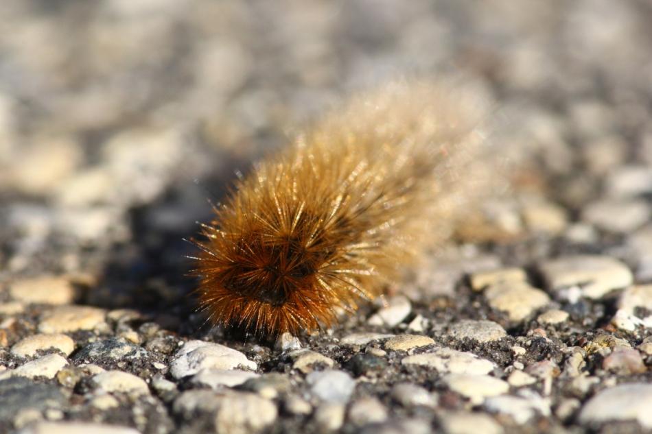 Artsy caterpillar